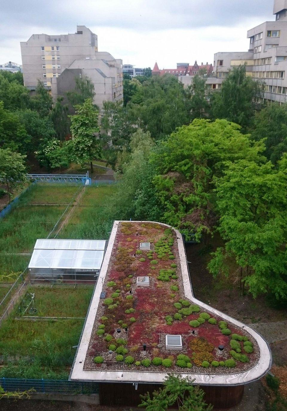 Grüne Oase dank Abwasser: Das Gemüse wird mit afbereitetem Grauwasser bewässert und gedüngt