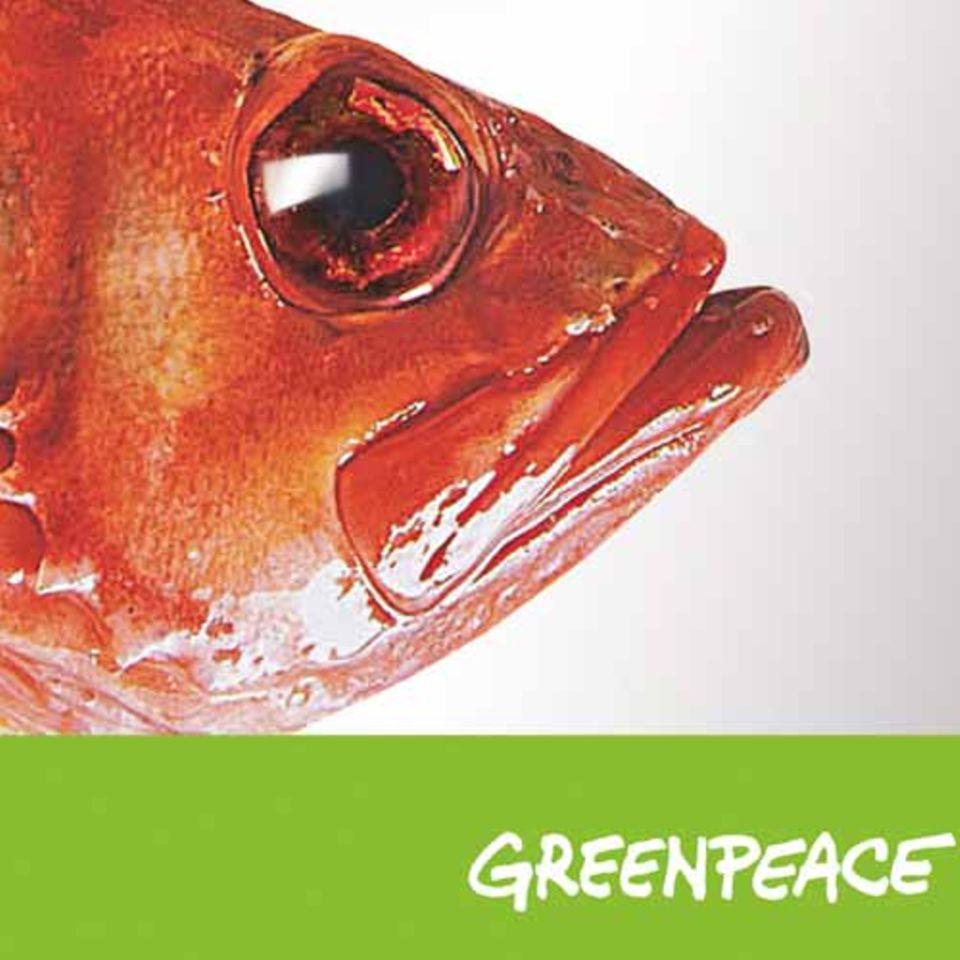 Neuer Fischratgeber von Greenpeace