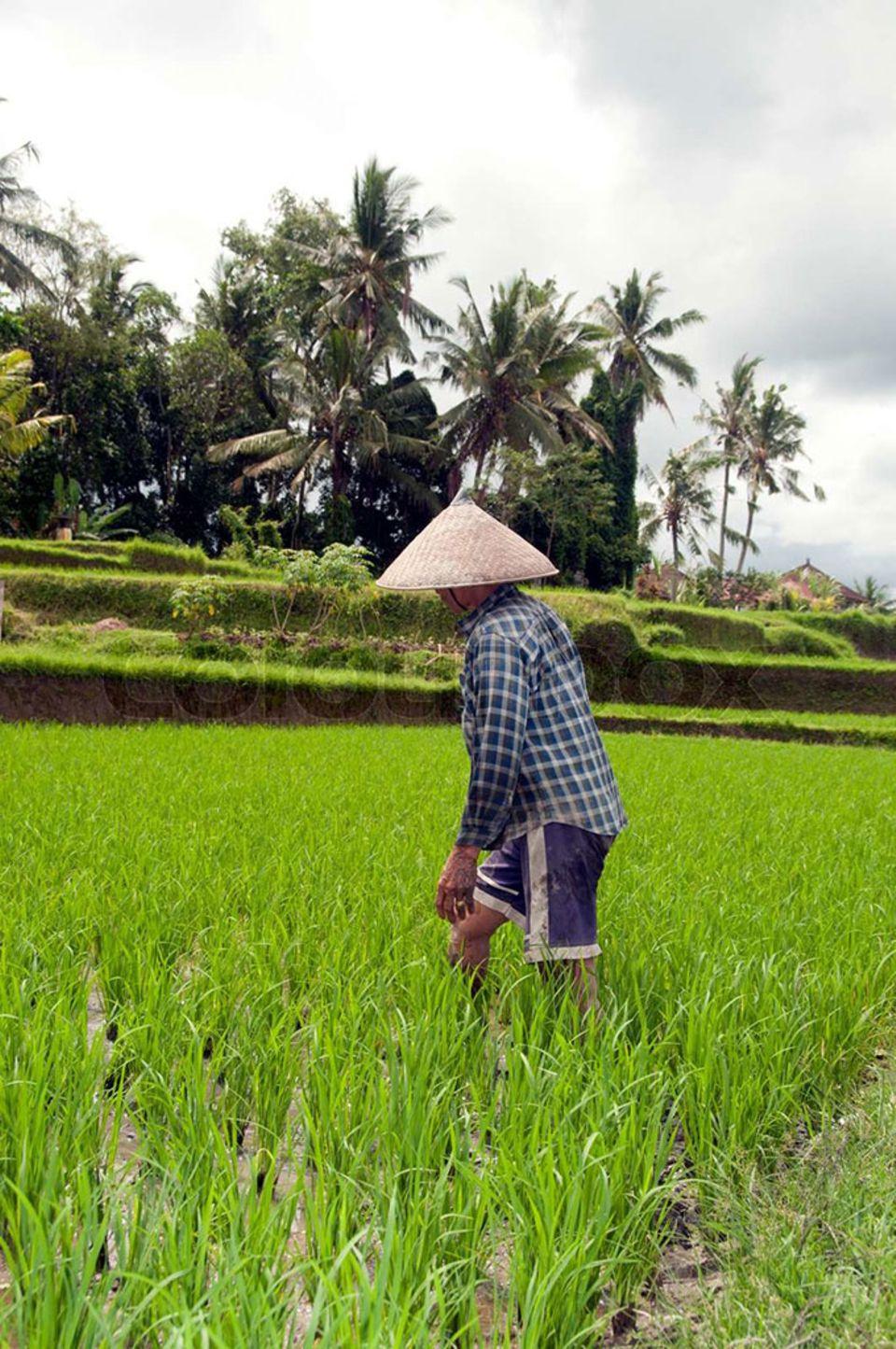 Eine Frau bei der Arbeit auf dem Reisfeld