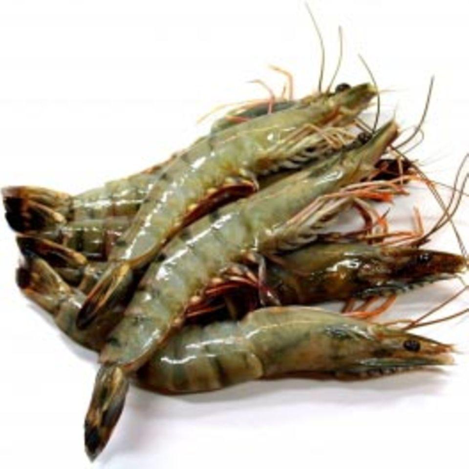Nachhaltiger Fischkonsum mit followfish