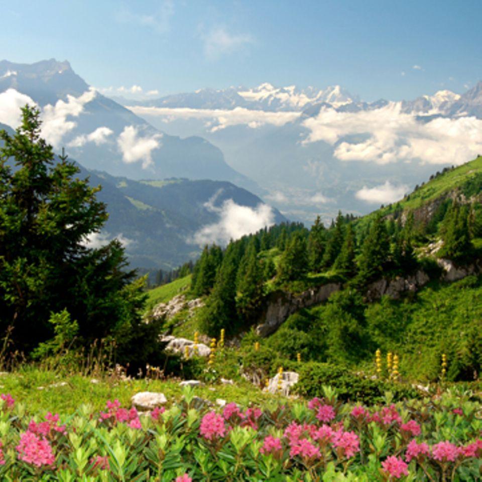 Der Berg ruft: Alpenküche