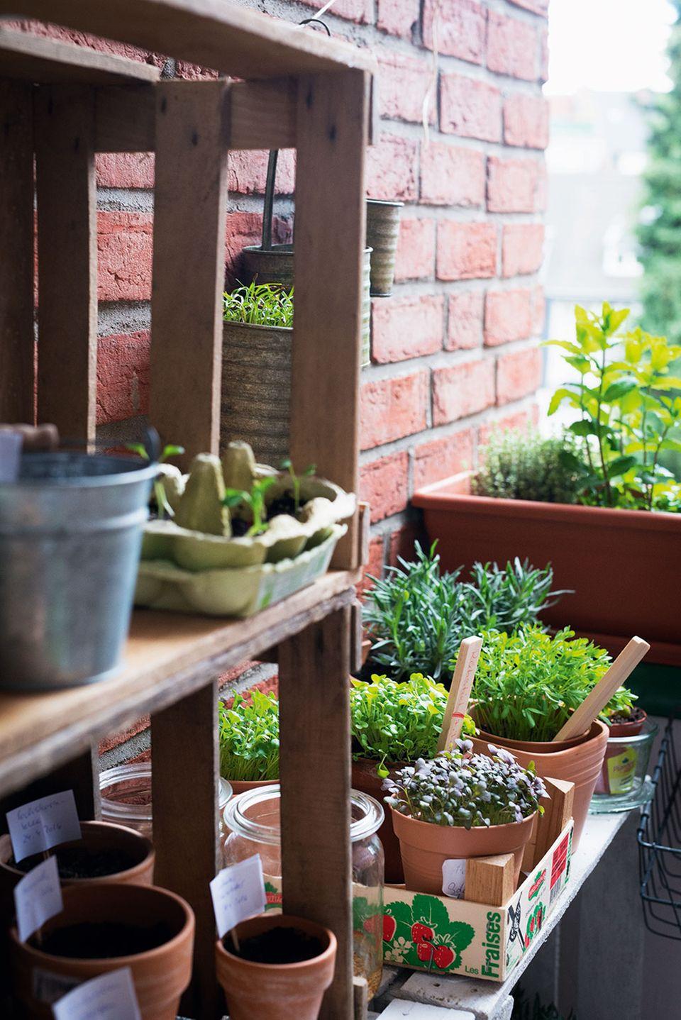 Bald können die Micro Greens auch schon bei Ihnen zuhause wachsen.