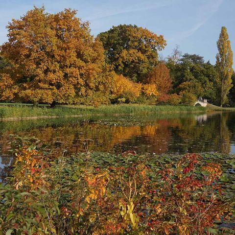 Wörlitzer Park in Sachsen-Anhalt