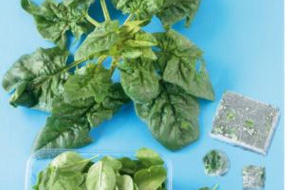 Spinat: Rezepte und Tipps