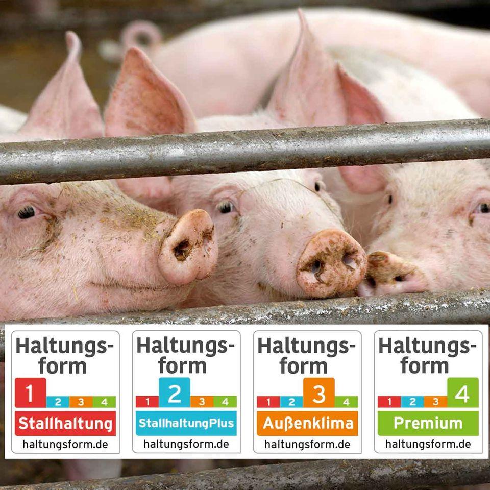 """Schweine und das """"Haltungsform"""" Siegel"""