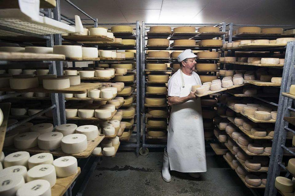 Käse auf der Alpkäserei Gerschnialp auf dem Alpkäse-Trail im Schweizer Engelberg