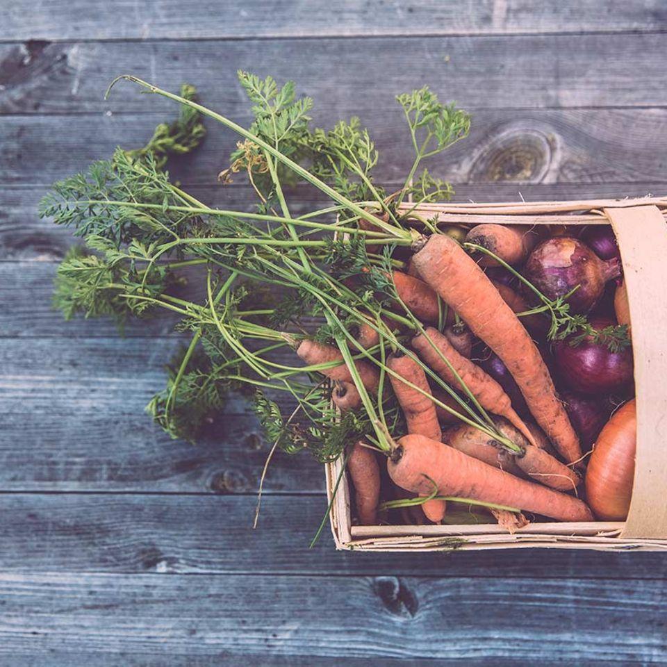 Möhren mit Möhrengrün und Zwiebeln in Holzkorb