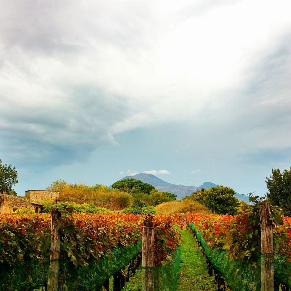Weingut in Italien in der Nähe von Neapel