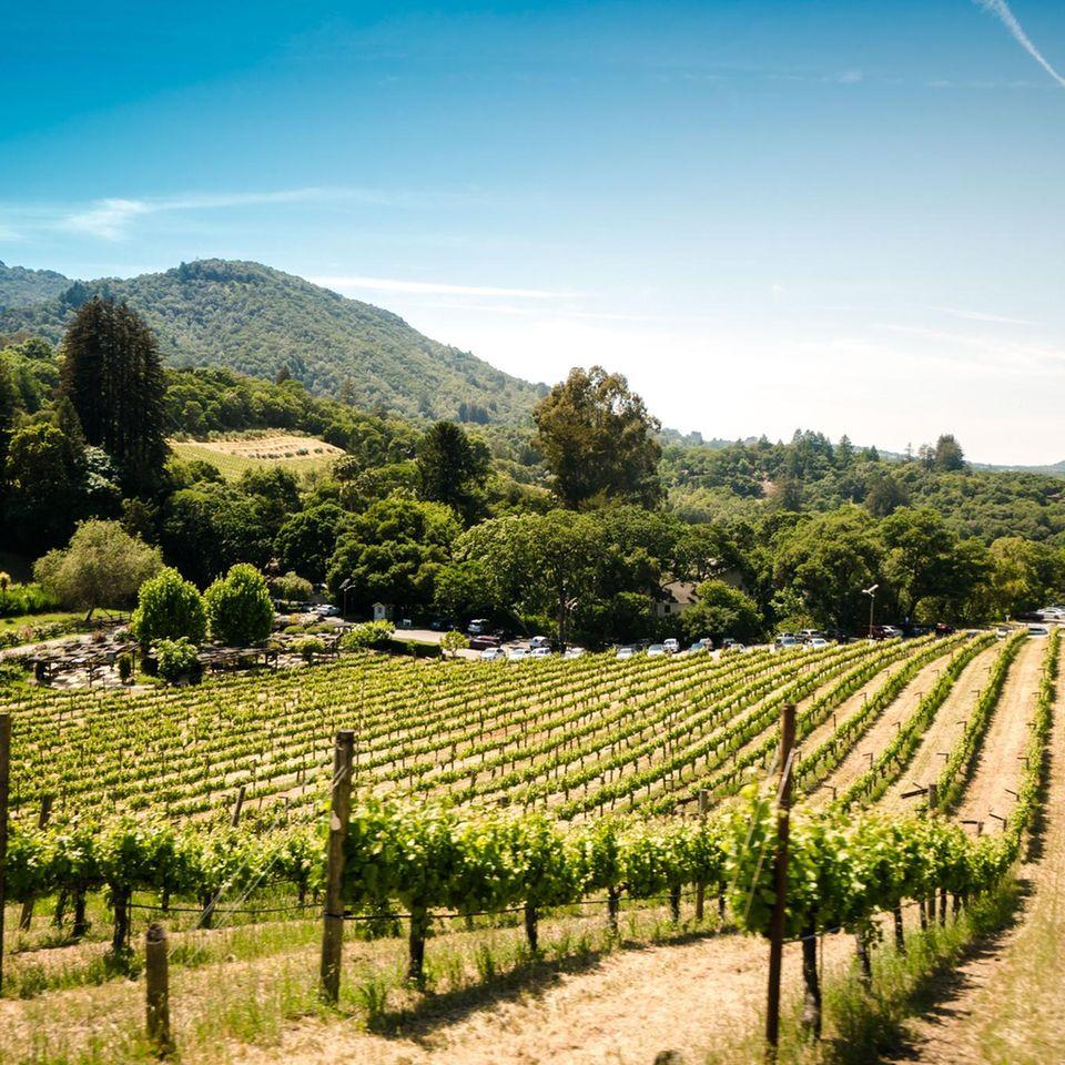 Weingut in Kalifornien