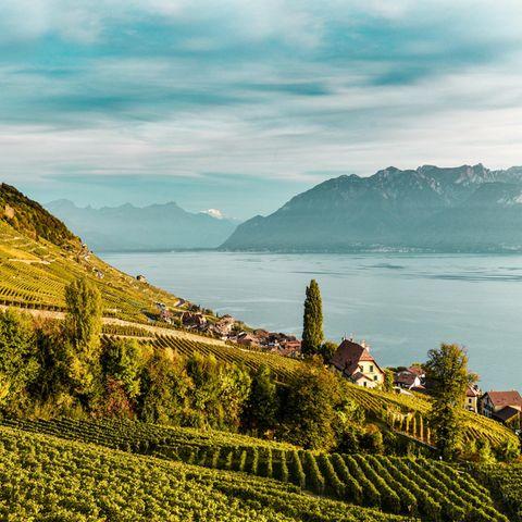 Weinberg-Terrassen in Lavaux am Genfer See