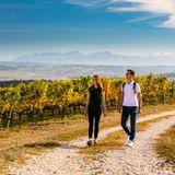 Weinberg Wanderung Côtes de L'orbe Schweiz