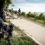 Mit dem Fahrrad durch das Weinanbaugebiet Vully in der Schweiz