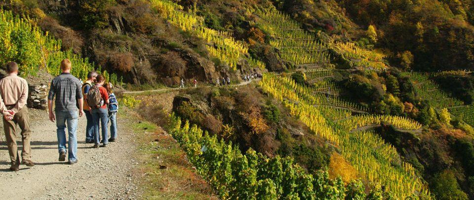 Auch Touristen schätzten das Ahrtal für seine romantischen Weinwanderwege.