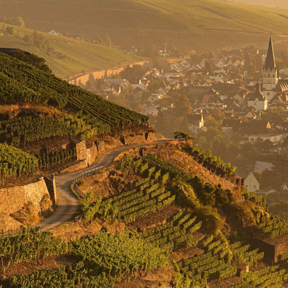 Das Ahrtal war Weinliebbhabern lange vor der Flutkatastrophe ein Begriff.